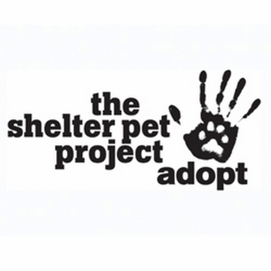 The Shelter Project logo